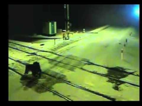 Zostawil-psa-na-torach-kolejowych